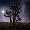 Joshua Tree, Moon and Milky Way