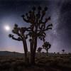 Joshua Tree, Moon and Milky Way
