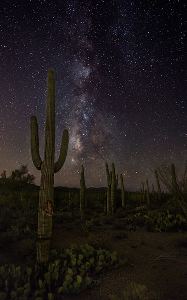 Saguaro and Milky Way, Saguaro National Park West