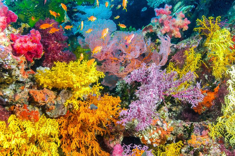 Fiji Underwater-33
