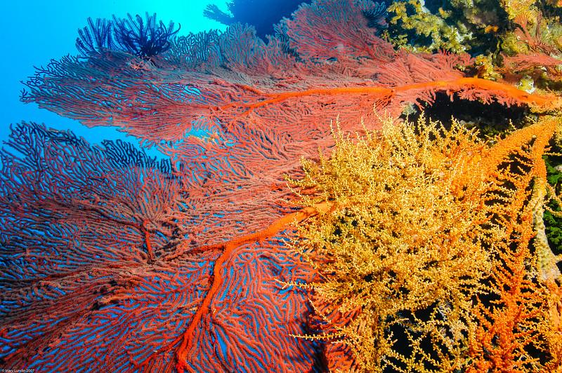 Fiji Underwater-55