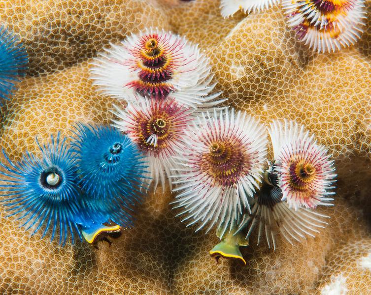 Fiji Underwater-79