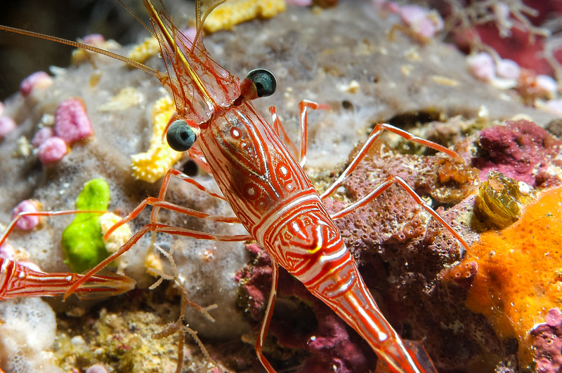 Fiji Underwater-94