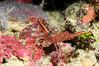 Fiji Underwater-16