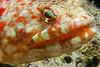 Fiji Underwater-5