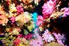 Fiji Underwater-51