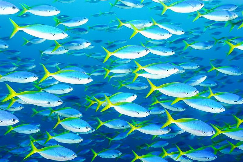 Fiji Underwater-6