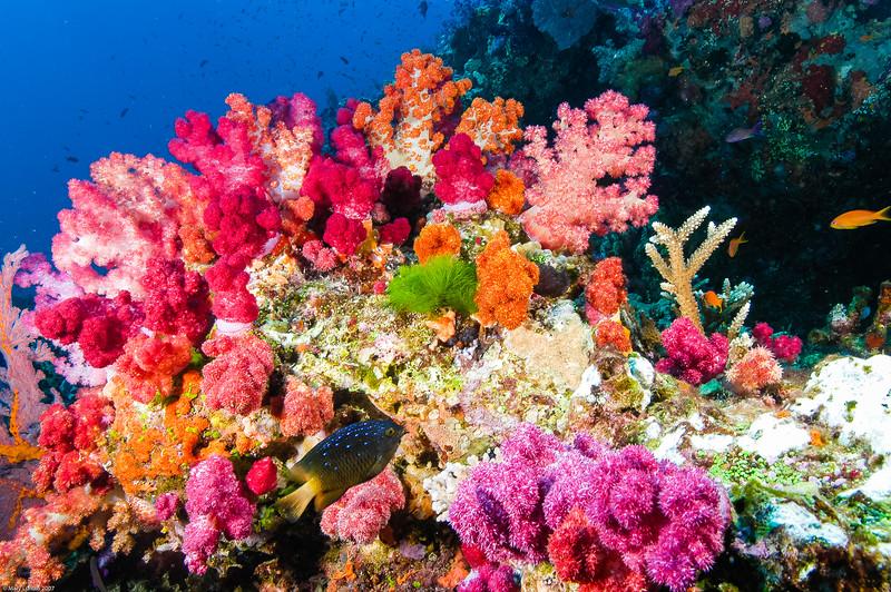 Fiji Underwater-54