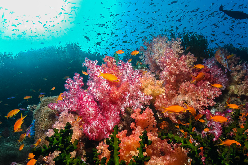 Fiji Underwater-8