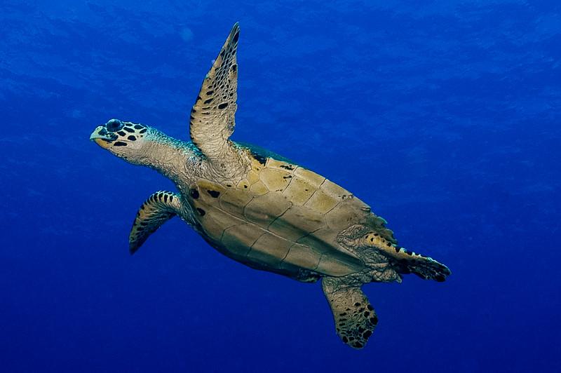 Fiji Underwater-36