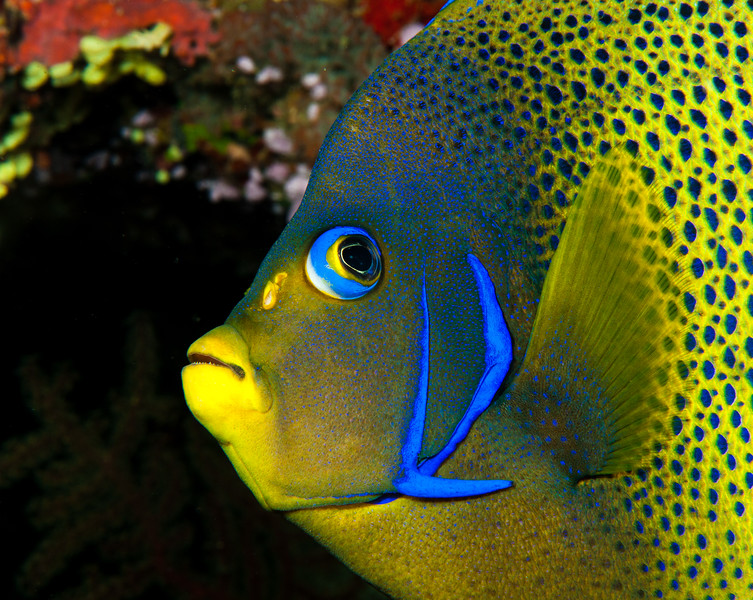 Fiji Underwater-77
