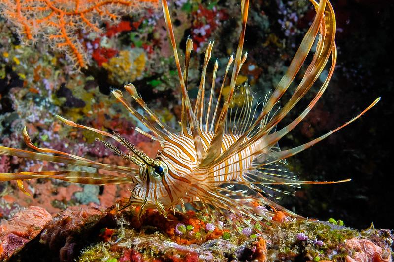 Fiji Underwater-38