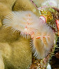 Fiji Underwater-57