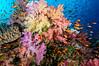 Fiji Underwater-69