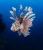 Fiji Underwater-10