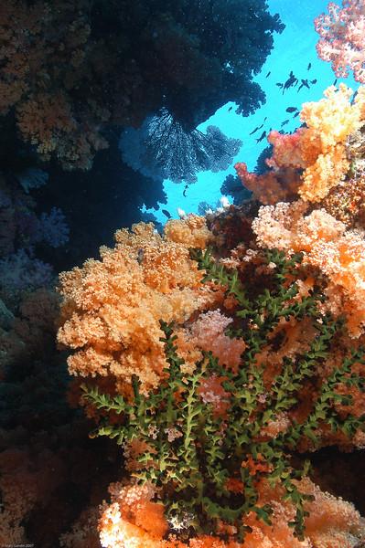 Fiji Underwater-45