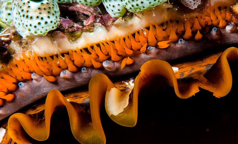 Fiji Underwater-74