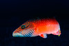 Fiji Underwater-52