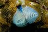 Fiji Underwater-59