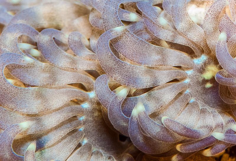 Fiji Underwater-75