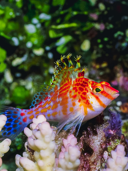 Fiji Underwater-44