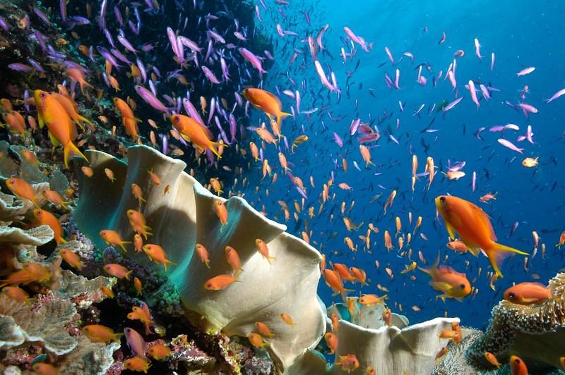 Fiji Underwater-41