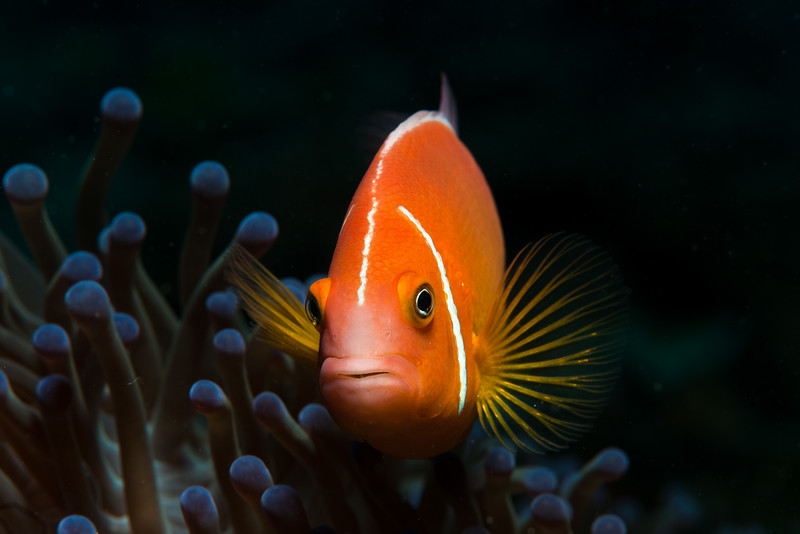 Fiji Underwater-93