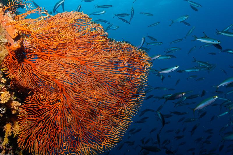 Fiji Underwater-53