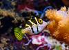 Fiji Underwater-43