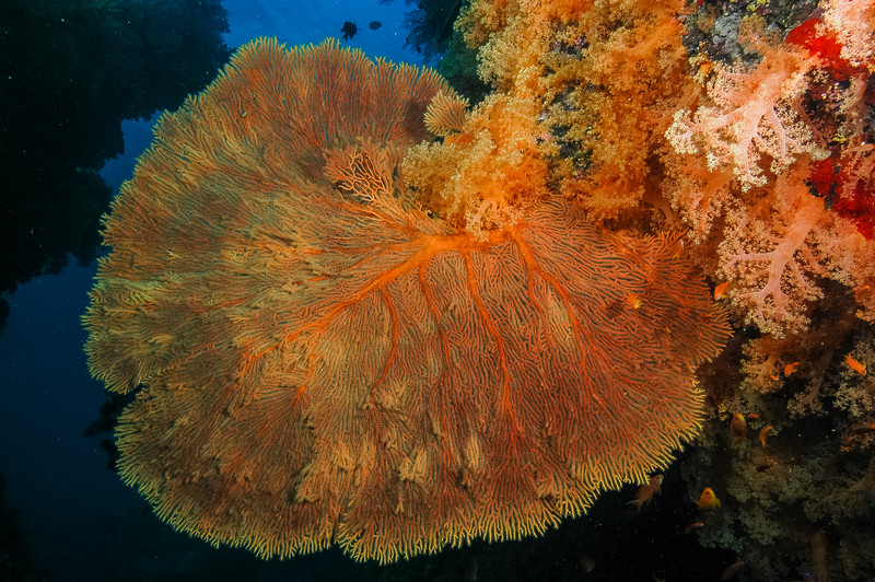 Fiji Underwater-3