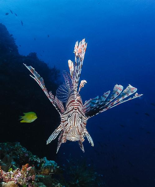 Fiji Underwater-11