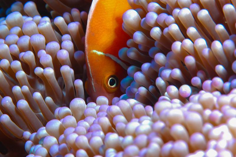 Fiji Underwater-21