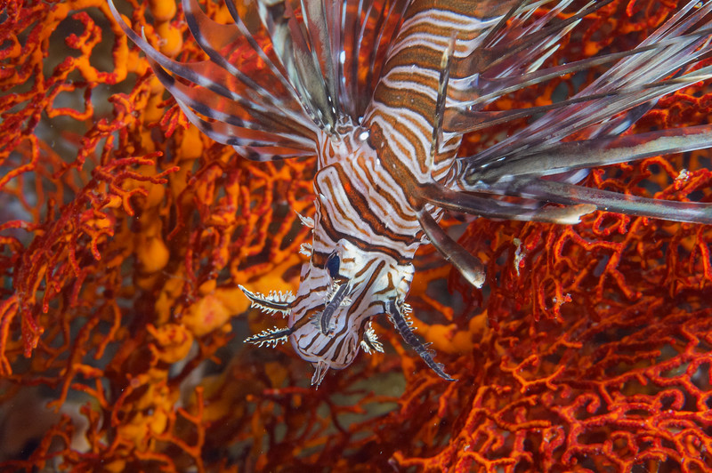 Fiji Underwater-70