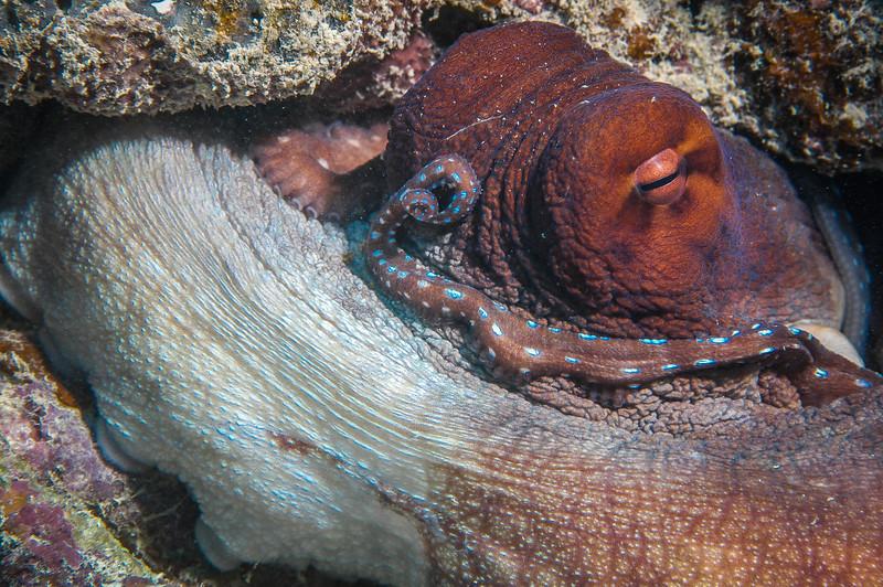 Fiji Underwater-37