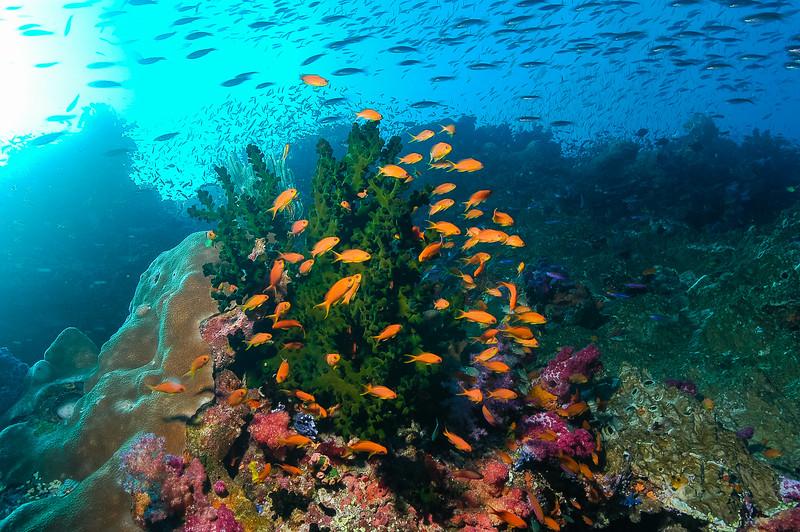 Fiji Underwater-7