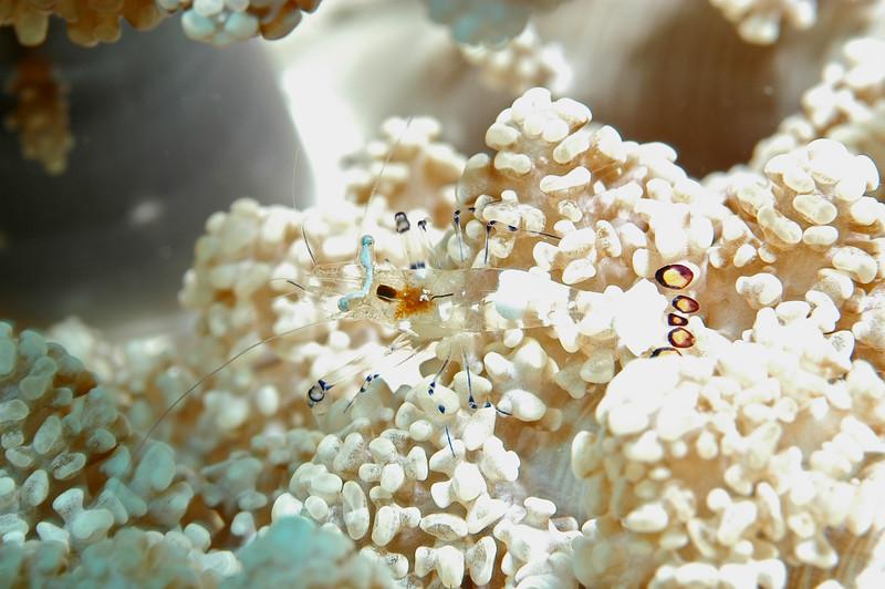 Fiji Underwater-22