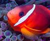 Fiji Underwater-72