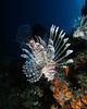Fiji Underwater-1