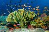 Fiji Underwater-9