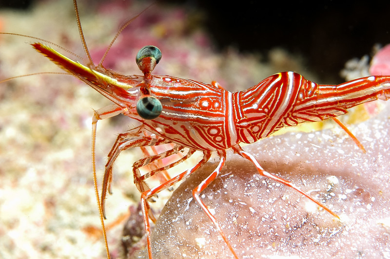 Fiji Underwater-15