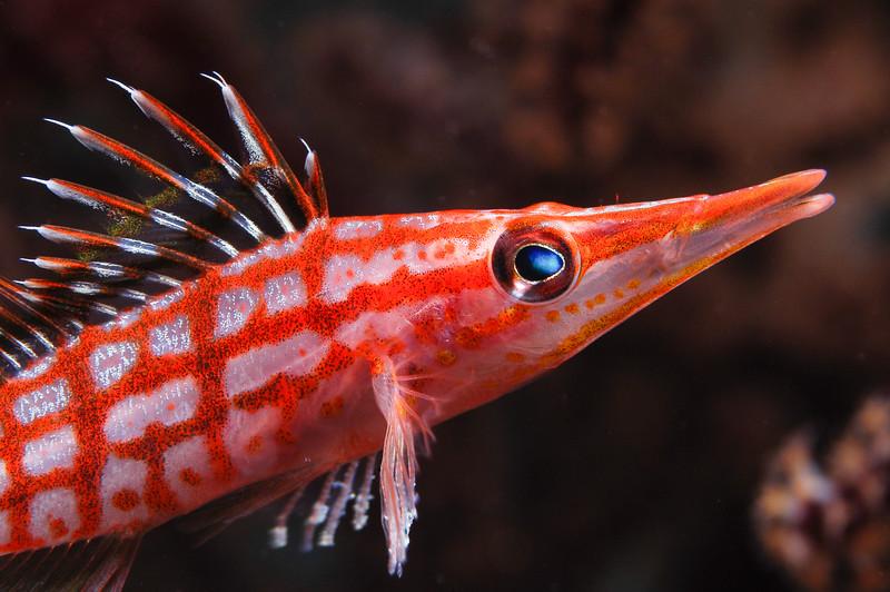 Fiji Underwater-24