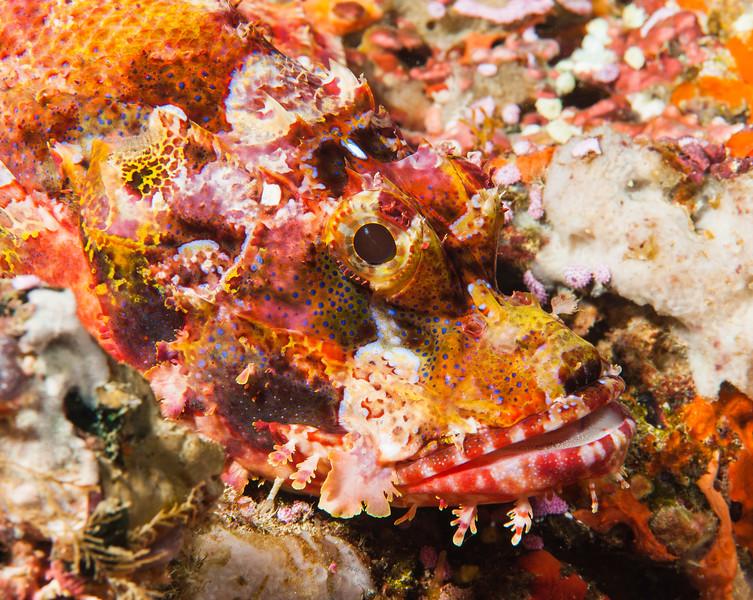 Fiji Underwater-87