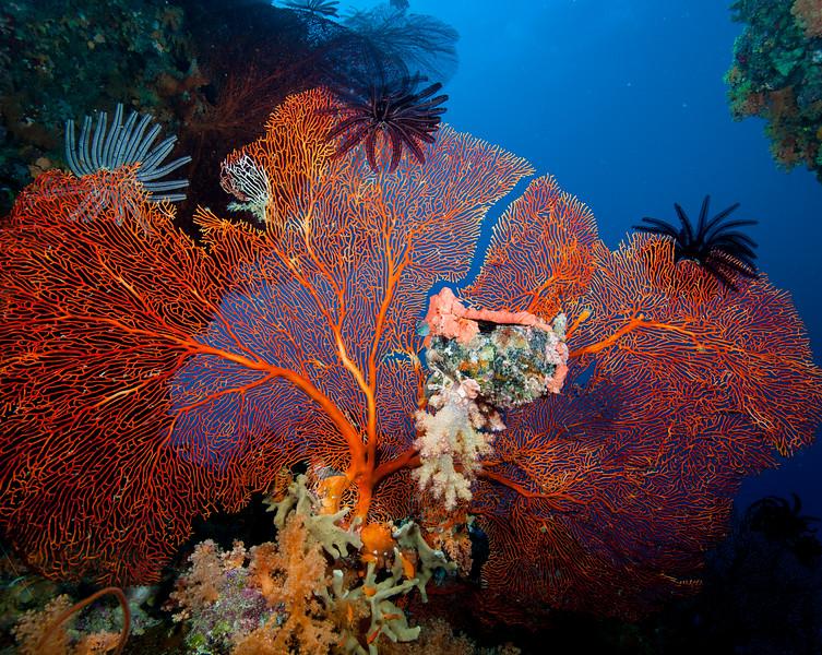 Fiji Underwater-90