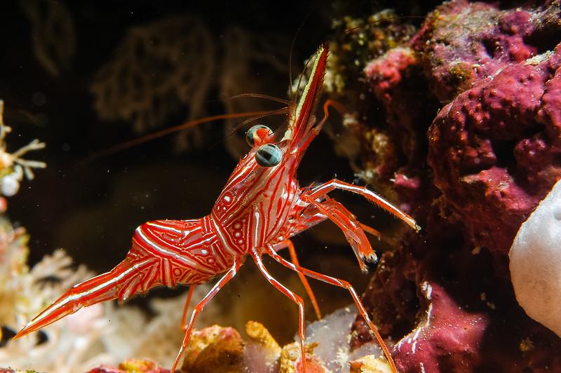 Fiji Underwater-17