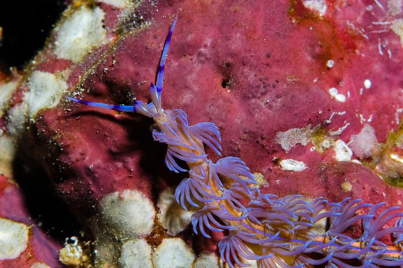 Fiji Underwater-20