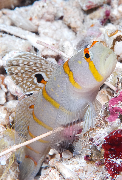 Fiji Underwater-30