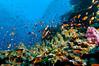 Fiji Underwater-40