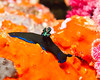 Fiji Underwater-88