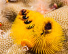 Fiji Underwater-81