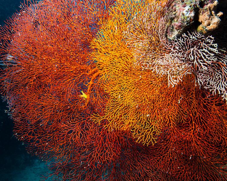 Fiji Underwater-91